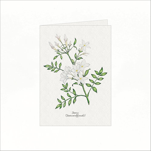 Greeting Card - Vintage Jasmine