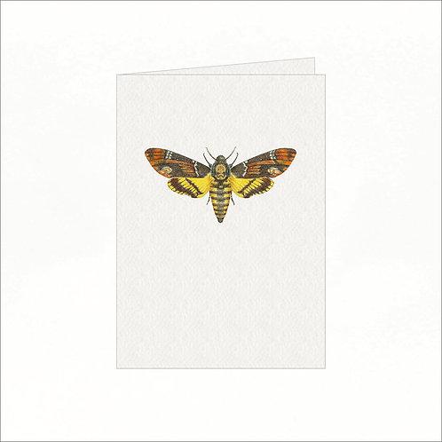 Greeting Card - Death's Head Hawk Moth