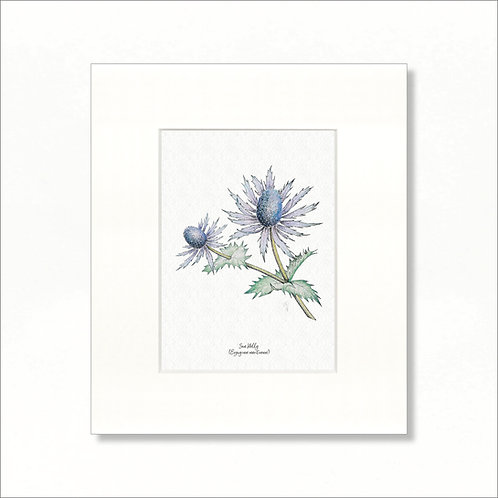 "Print - Vintage Sea Holly, 8""x10"""