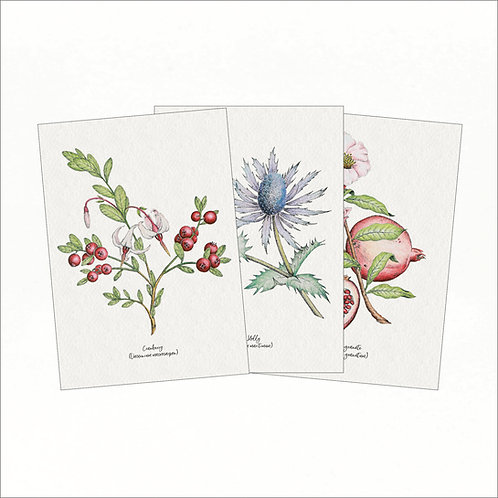 Set of 3 Vintage Greeting Cards - Cranberry, Sea Holly, Pomegranate