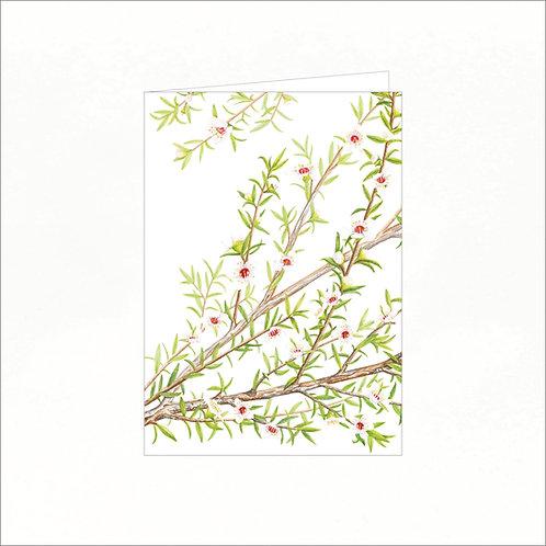 Greeting Card - Manuka (Leptospermum scoparium)