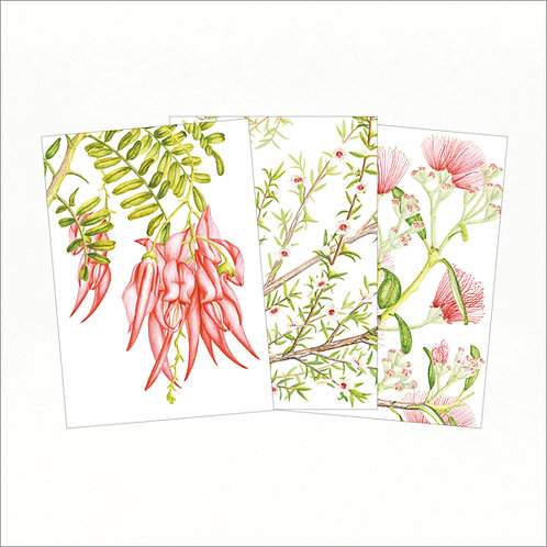 Set of 3 Greeting Cards - Kakabeak, Manuka, Pohutukawa