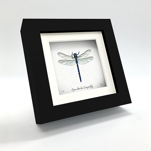 Miniature - Azure Hawker Dragonfly