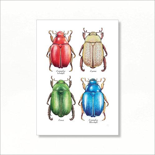 A4 Print - Australian Christmas Beetles