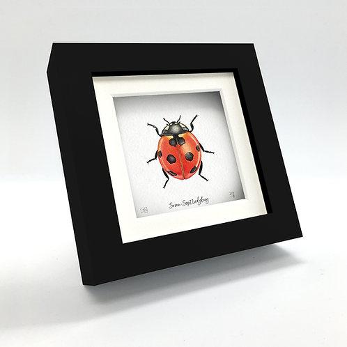 Miniature - 7-Spot Ladybug