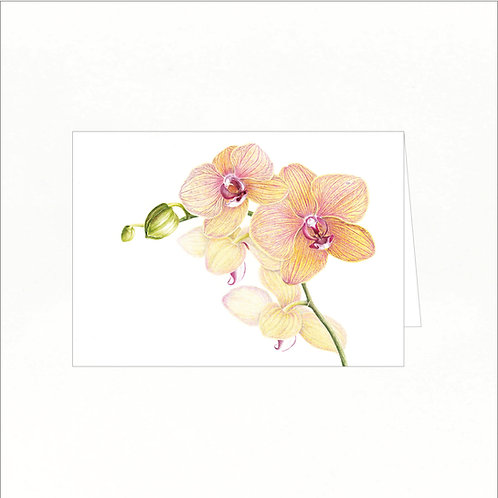 Greeting Card - Moth Orchid/Phalaenopsis