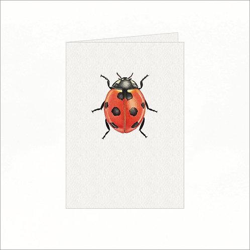 Greeting Card - 7 Spot Ladybug