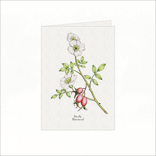 Greeting Card - Vintage Rose Hip