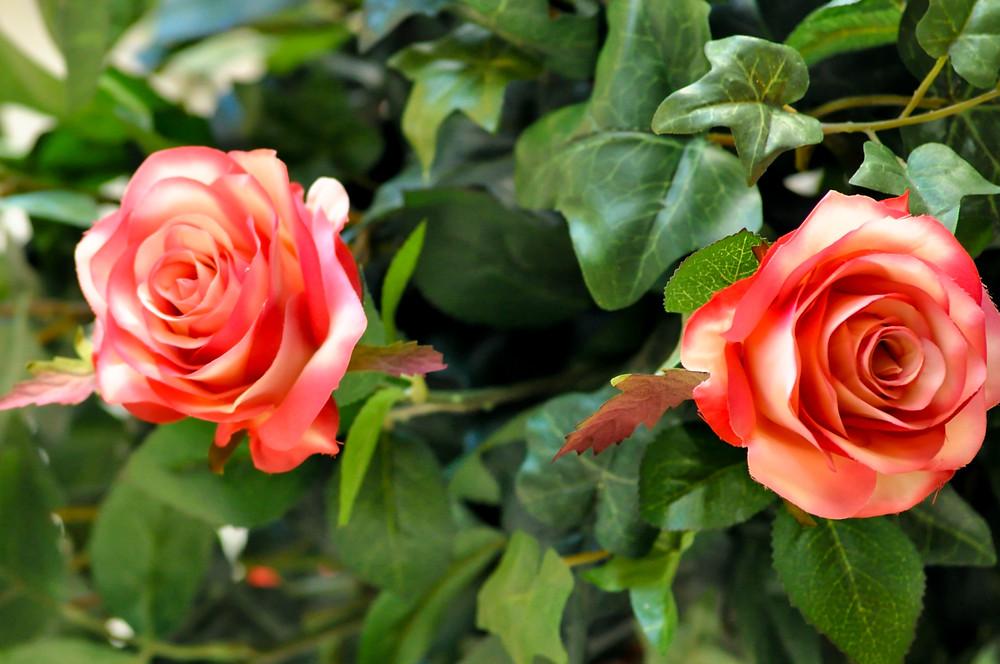 silk rose.jpg