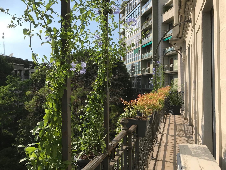 Giardiniere Palestro Milano