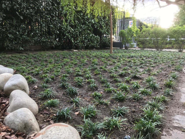 Giardiniere San siro Milano
