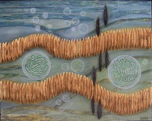 Algues (2001)
