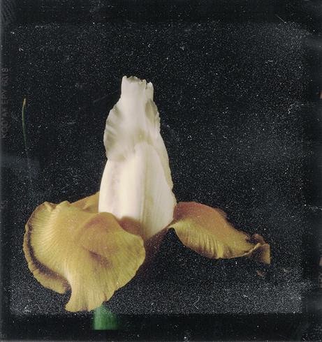 Fleurs d'archives #02