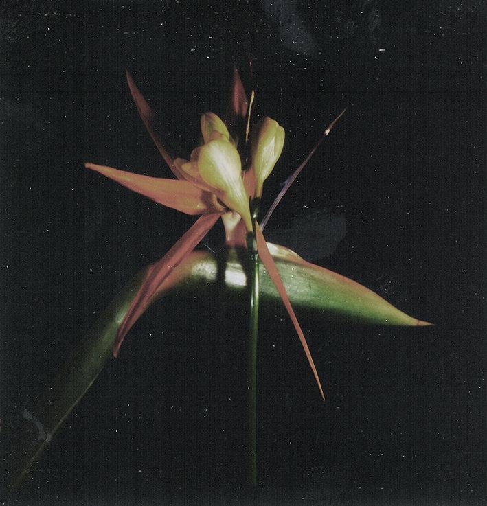 Fleurs d'archives #03