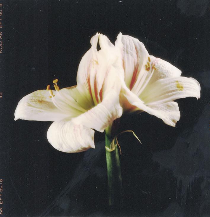Fleurs d'archives #08