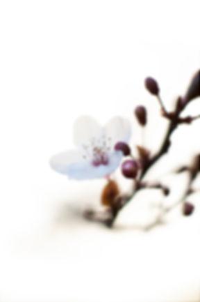 Végétal 12.jpg