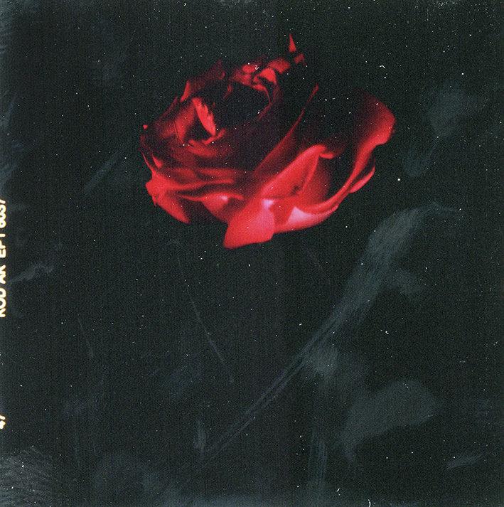 Fleurs d'archives #05