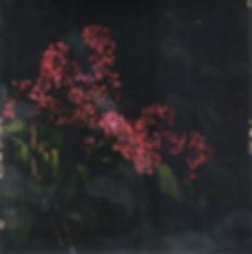 Fleurs d'archives #07