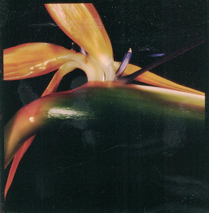 Fleurs d'archives #04