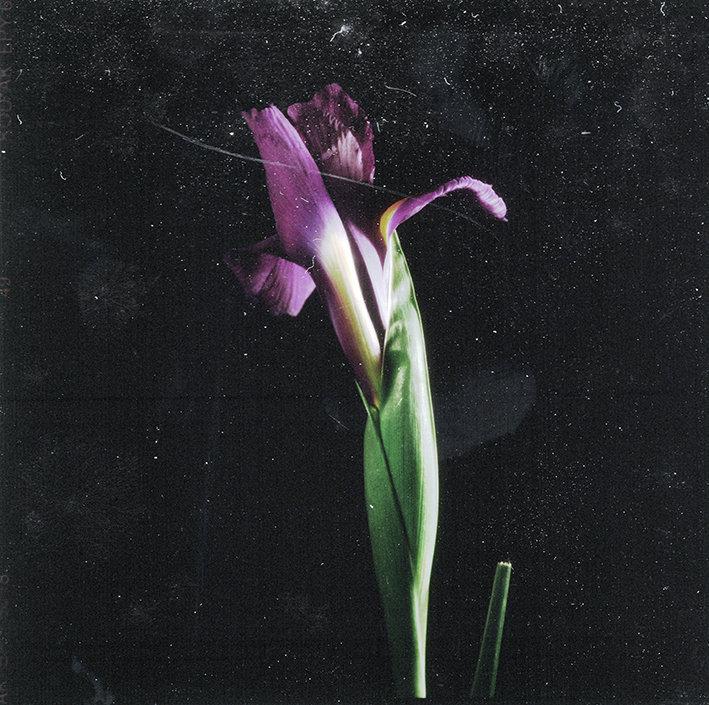 Fleurs d'archives #06
