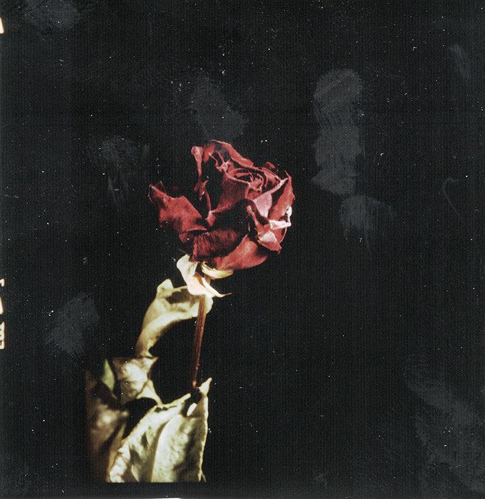 fleurs d'archives #01