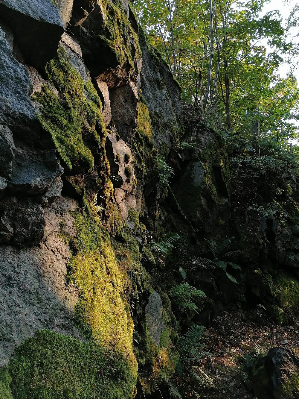 Sammaleen peittämä kallio metsässä.