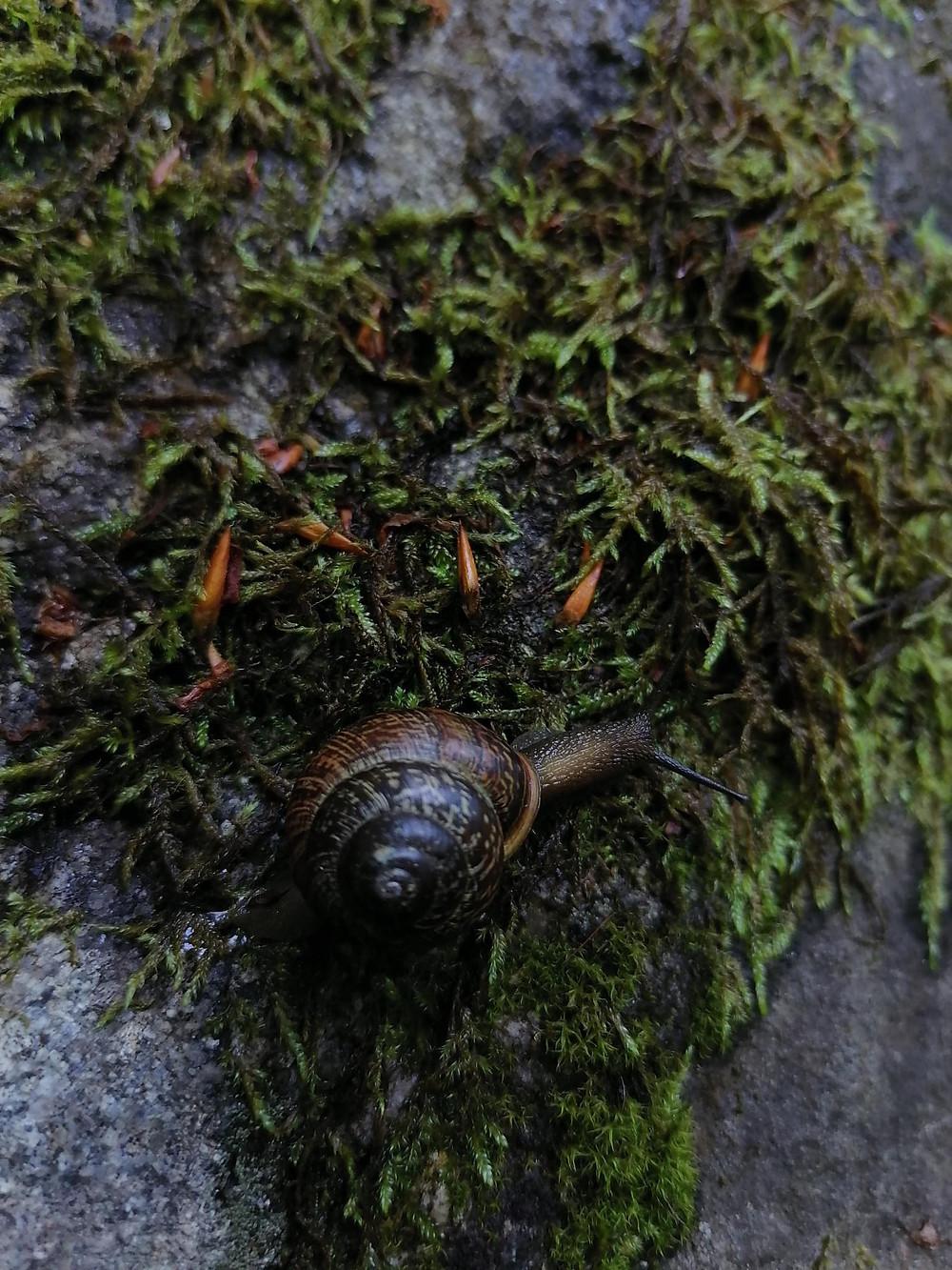 Iso kotilo sammaleisen kiven päällä sateen jälkeen.