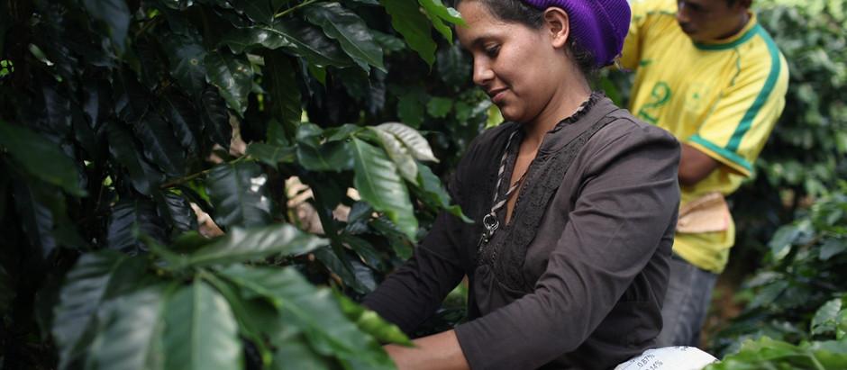 Reilua kauppaa Latinalaisessa Amerikassa – ilmaston ja ihmisten puolesta