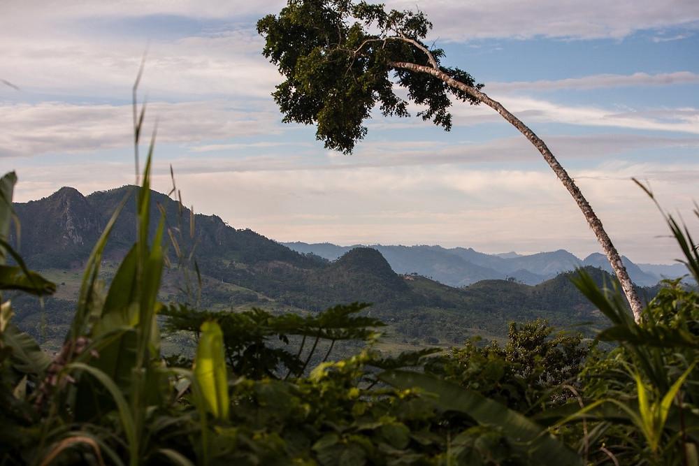 Kaakaoviljelys Nicaraguassa