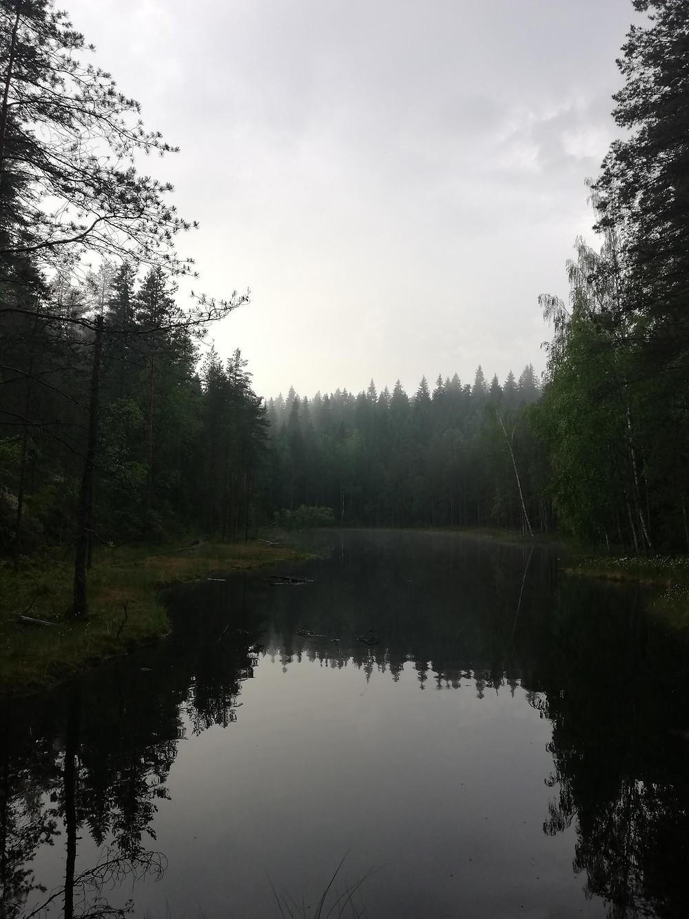 Kuva suomalaisesta havumetsästä. Kuvan keskellä on lampi, jonka ympärillä havupuut kurkottavat kohti taivasta.