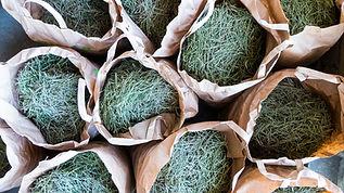 okka pine needles.jpg