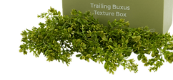 BUXUS.png