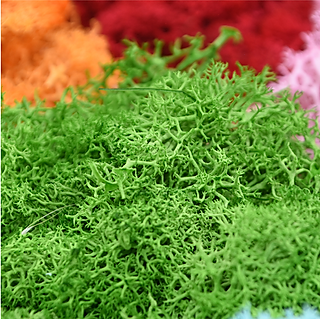 ARTIFICIAL MOSS.png
