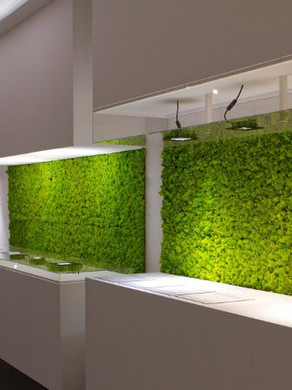 Moss Panels Ideas