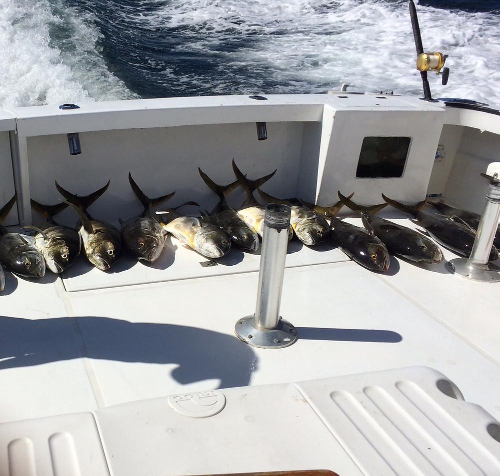 Fishing off the coast of Puerto Vallarta