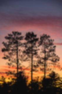 Burning Pines 3:2.jpg