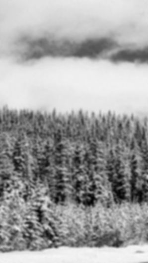 Snowy Noir 9:16.jpg