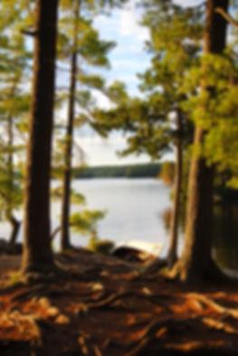 Tall Trees | Algonquin Photography | Algonquin Provincial Park, Ontario, Canada