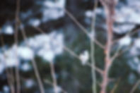 Winter Chickadee 3:2.jpg