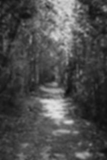 Cedar Strip | Forest Photography | Kolapore Uplands, Ontario, Canada