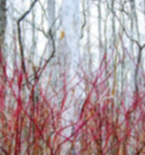 Poplar Grove | Forest Photograpy | The Blue Mountains, Ontario, Canada