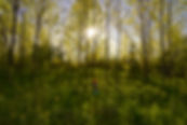 Spring Meadow | Forest Photography | Metcale, The Blue Mountains, Ontario, Canada