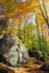 Metcalfe Fall | Forest Photography | Kolapore Uplands, Ontario, Canada