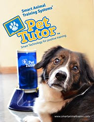 Pet Tutor Branding & Device