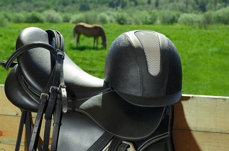 The bridle, the horse saddle and the rid