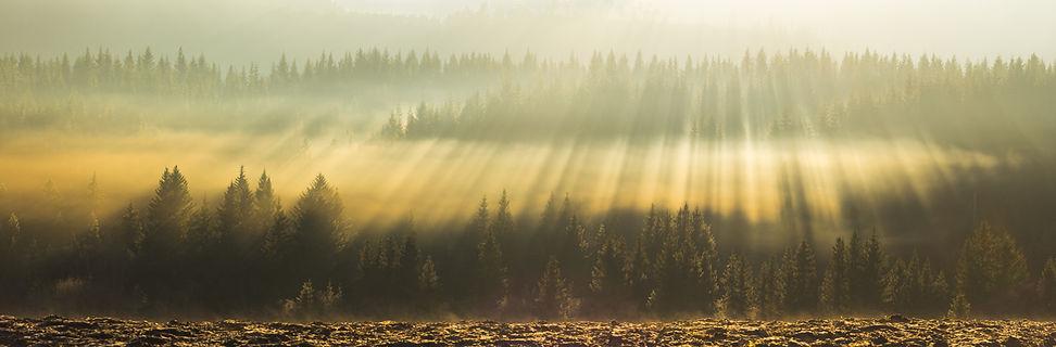 Waldpanorama.jpg