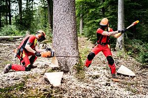 JaFo GmbH Holzernte.jpg