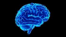 cervello_ilquorum2.png