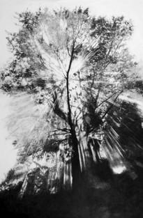 Gerard Lucian Ricard - Perfect Light