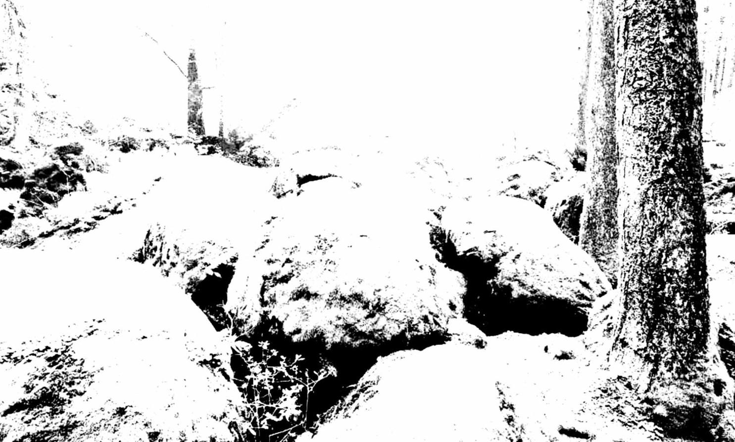 Gerard Lucian Ricard - The Bark of Dreams
